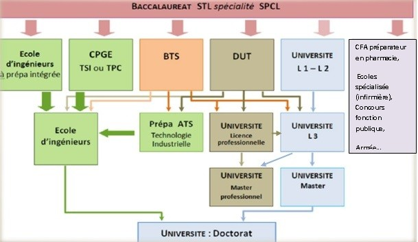 schema organisationnel SPCL
